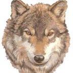 Wolfolo